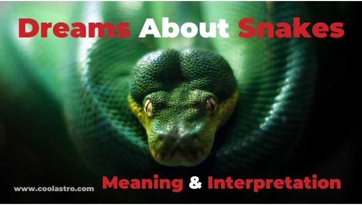 Dreams About Snakes meaning & Interpretation