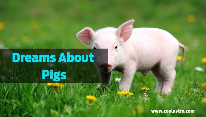 Dreams About Pigs meaning and interpretation