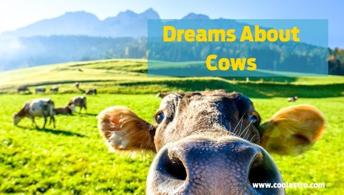 Dreams About cows meaning and interpretation