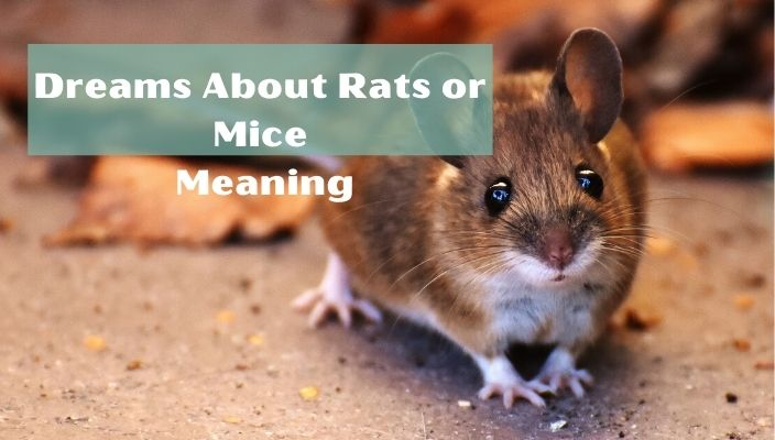 Dreams about Rats meaning and interpretation