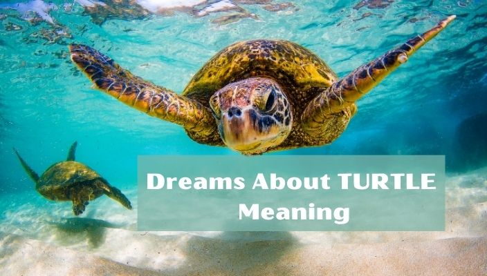 Dreams about TURTLE meaning and interpretation