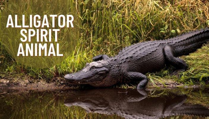 Alligator Spirit Animal Meaning and Symbolism