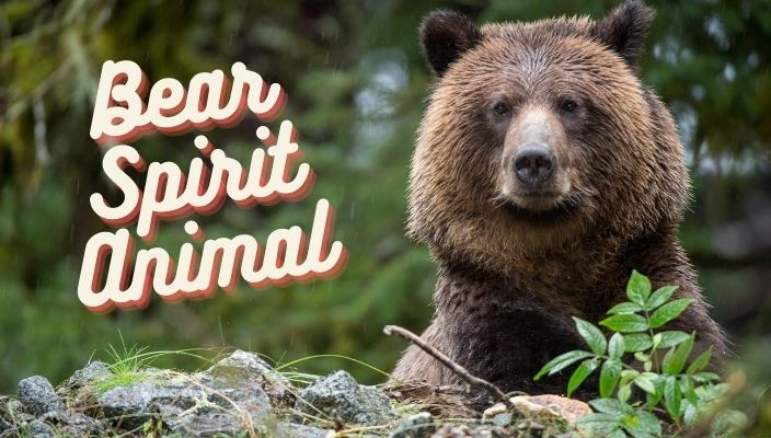 Bear Spirit Animal Meaning and Totem