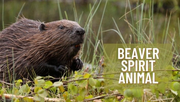 Beaver Spirit Animal Meaning and Symbolism
