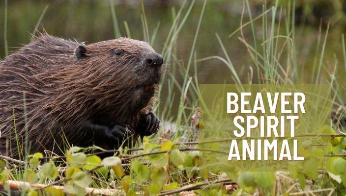 Beaver Spirit Animal Meaning and Symbolism