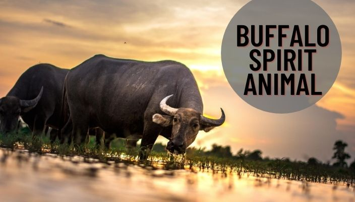 Buffalo Spirit Animal Meaning and Symbolism