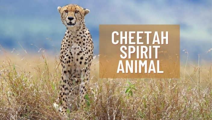 Cheetah Spirit Animal Meaning and Symbolism