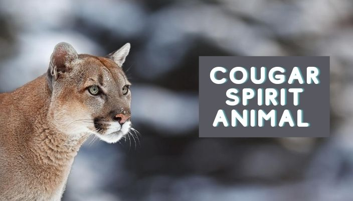 Cougar Spirit Animal Meaning and Symbolism