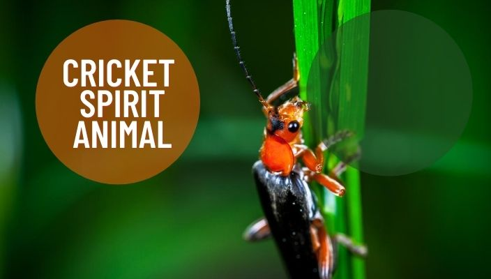 Cricket Spirit Animal Meaning and Symbolism