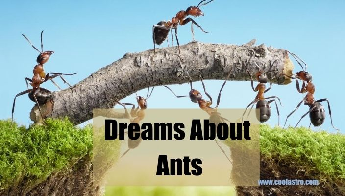 Dream About Ants Meaning and Interpretation