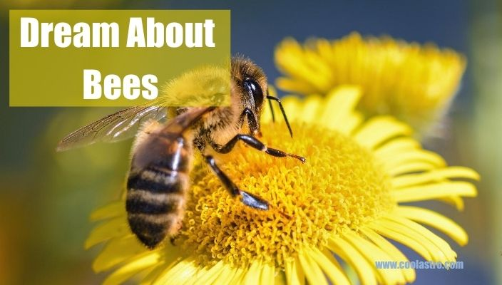 Dream About Bees Meaning and Interpretation