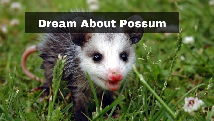 Dream About Possum Meaning and Interpretation