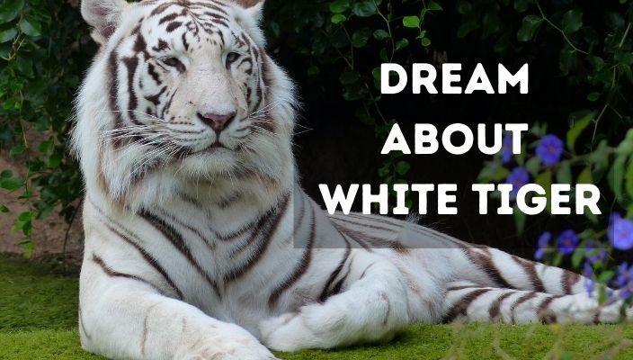 Dream About white tiger meaning and interpretation