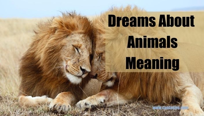 Dreams About Animals Meaning and Interpretation