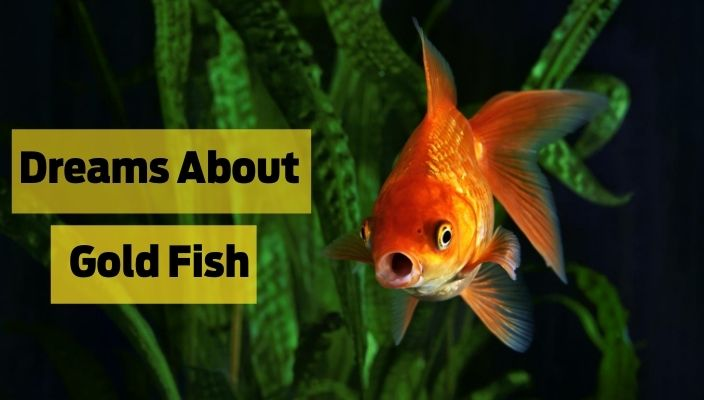 Dreams About Goldfish Meaning and Interpretation