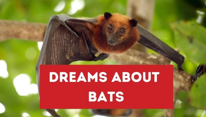 Dreams About bats meaning and interpretation