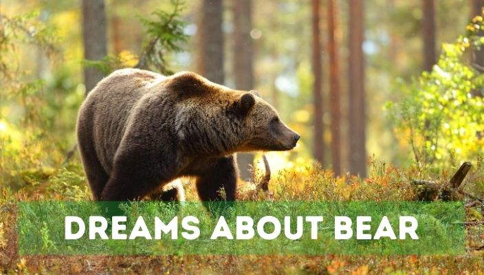 Dreams About bear meaning and interpretation