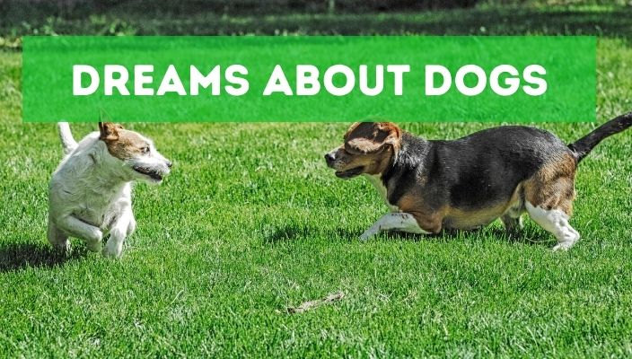 Dreams About dogs meaning and interpretation