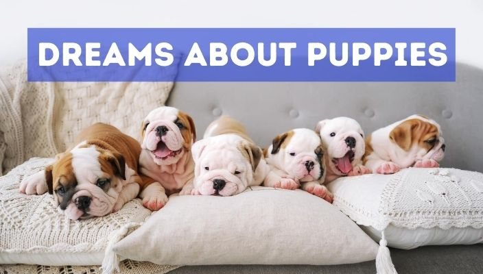 Dreams About puppies meaning and interpretation