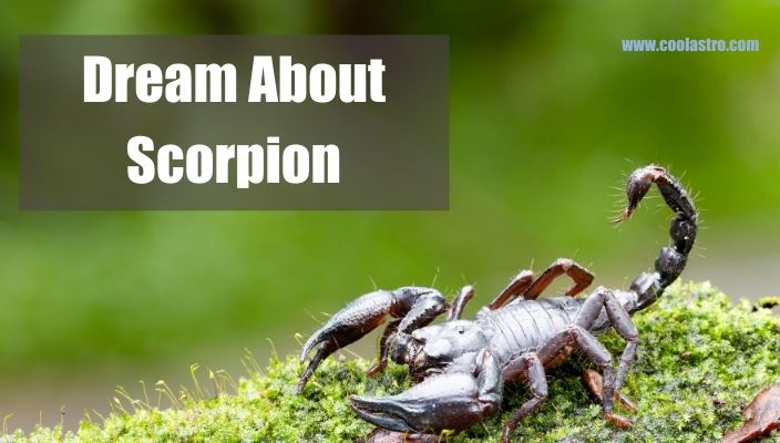 Dream About scorpion Meaning and Interpretation