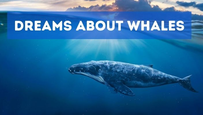 Dreams About whales meaning and interpretation