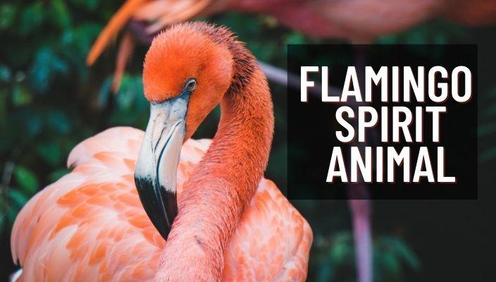 Flamingo Spirit Animal Meaning and Symbolism