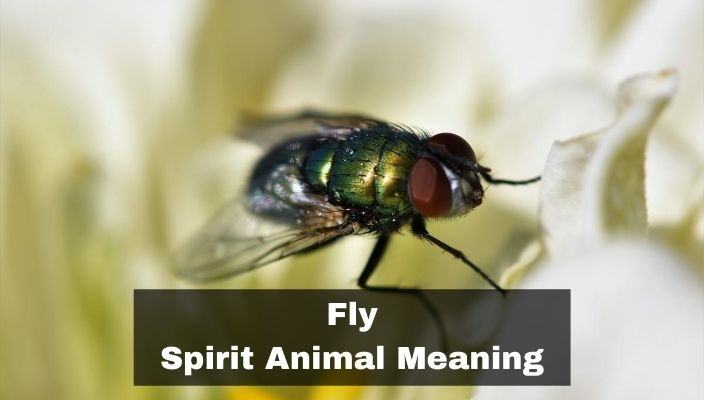Fly Spirit Animal Meaning