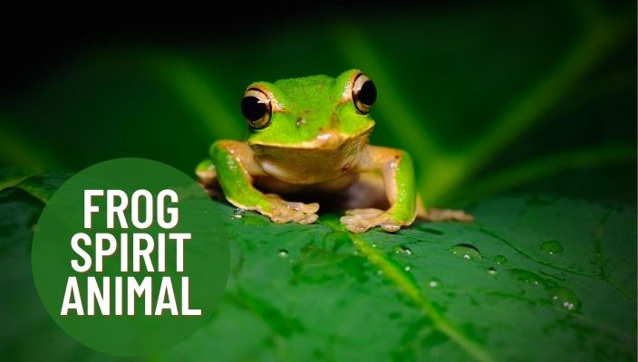 Frog Spirit Animal Meaning and Symbolism