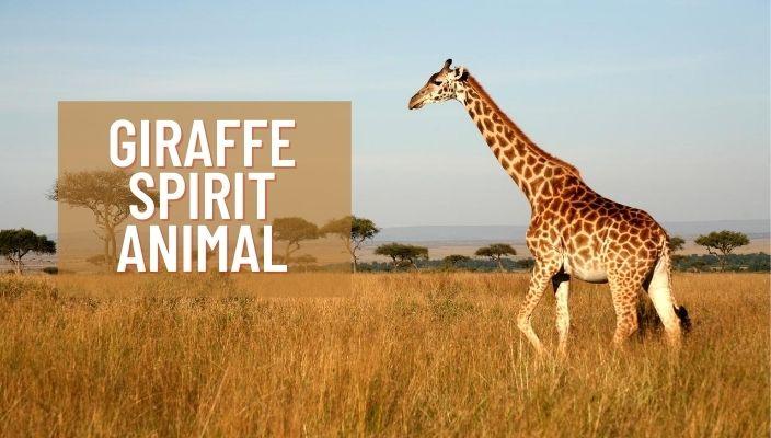 Giraffe Spirit Animal Meaning and Symbolism