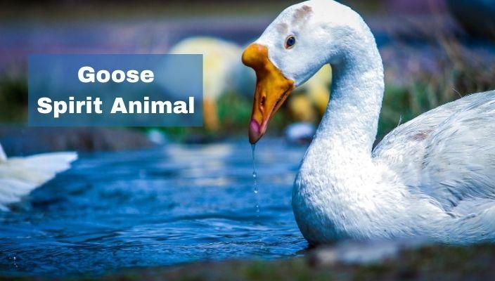 Goose Spirit Animal Meaning