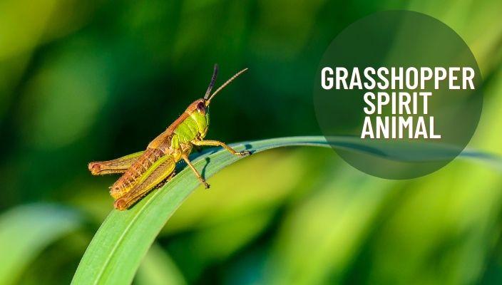 Grasshopper Spirit Animal Meaning and Symbolism