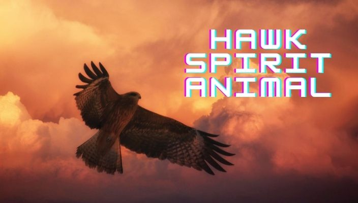 Hawk Spirit Animal Meaning and totem
