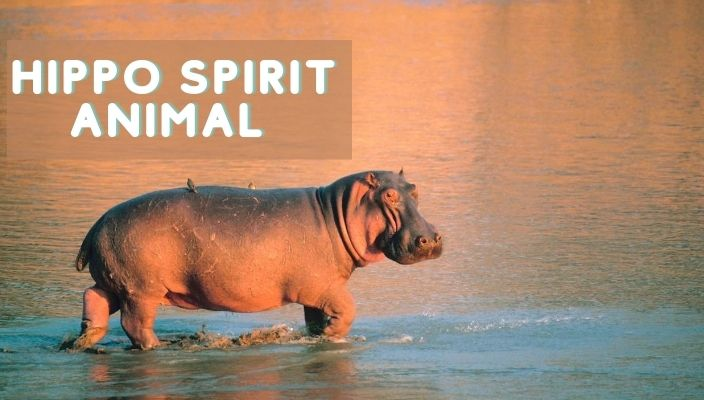 Hippo Spirit Animal Meaning and Symbolism