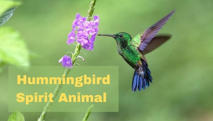 Hummingbird Spirit Animal Meaning