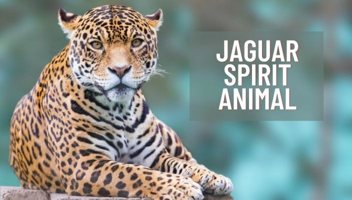 Jaguar Spirit Animal Meaning and Symbolism