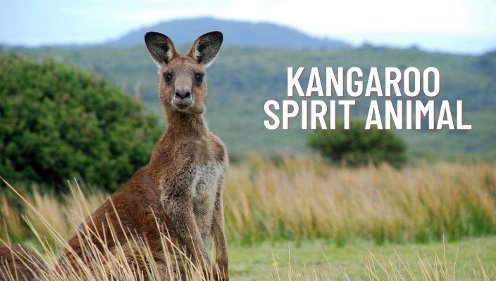 Kangaroo Spirit Animal Meaning and Symbolism