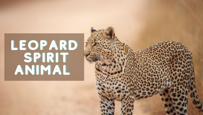 Leopard Spirit Animal Meaning and Symbolism