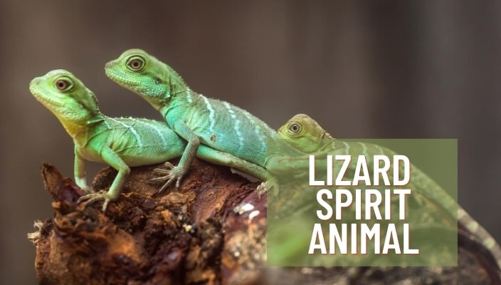 Lizard Spirit Animal Meaning and Symbolism