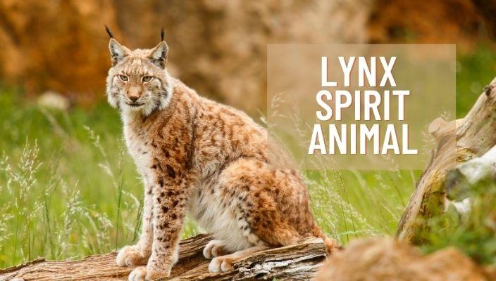 Lynx Spirit Animal Meaning and Symbolism
