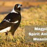 Magpie Spirit Animal Meaning