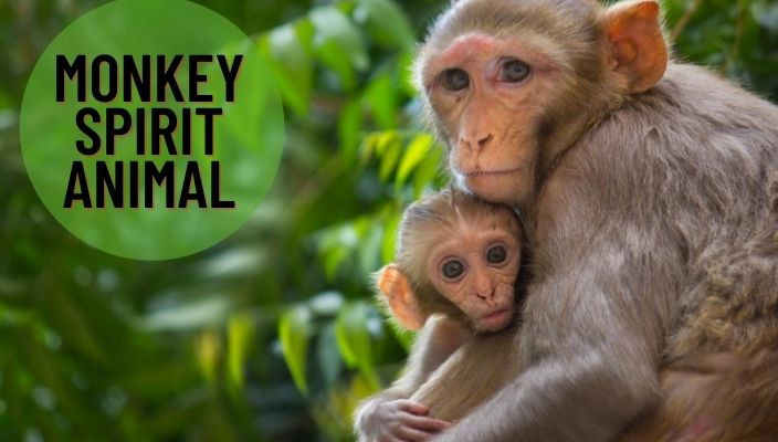 Monkey Spirit Animal Meaning and Symbolism
