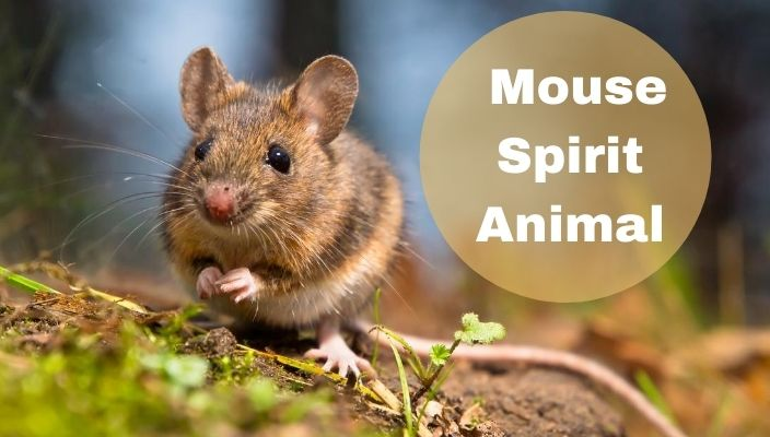 Mouse Spirit Animal Meaning and Symbolism