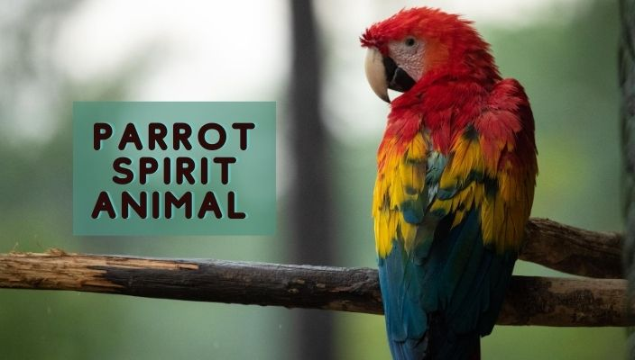 Parrot Spirit Animal Meaning and Symbolism