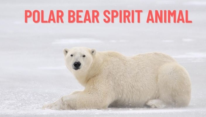 Polar Bear Spirit Animal Meaning and Symbolism
