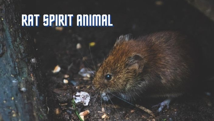Rat Spirit Animal Meaning and Symbolism