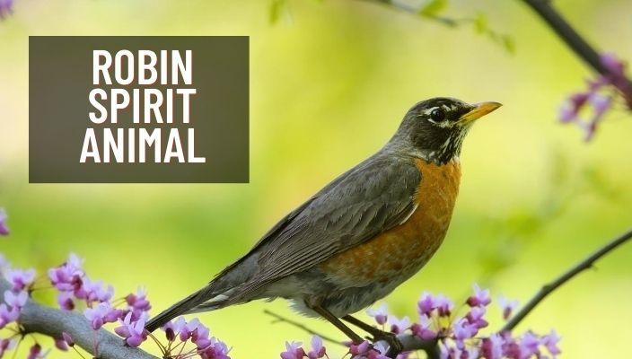 Robin Spirit Animal Meaning and Symbolism