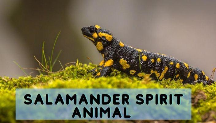 Salamander Spirit Animal Meaning and Symbolism