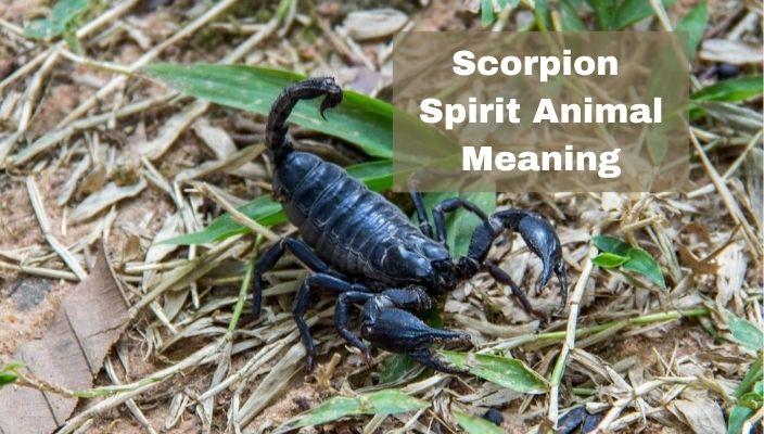 Scorpion Spirit Animal Meaning
