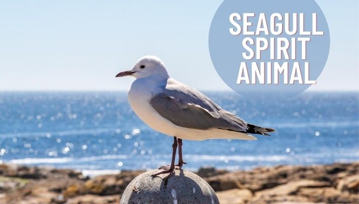 Seagull Spirit Animal Meaning and Symbolism