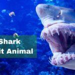 Shark Spirit Animal Meaning